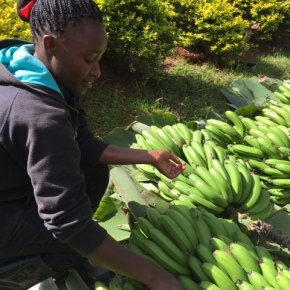 Peyton Fleming: Cold into Cash: Reinventing Kenya's rural food systems